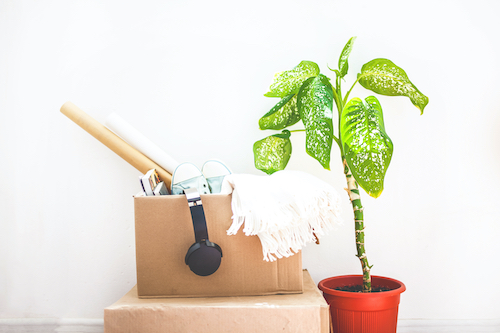 moving, things in boxes, garage sale, flower in a pot on a white background Copy space
