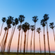 Palm Trees in Orange County